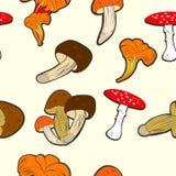 采蘑菇无缝的墙纸 免版税库存图片