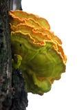 采蘑菇木 免版税库存照片