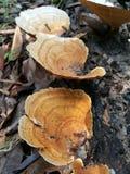 采蘑菇木头 图库摄影