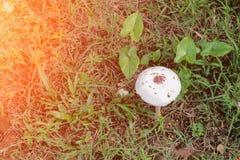 采蘑菇本质上美好在与日落光口气的地板草 库存图片