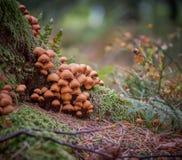 采蘑菇树干 免版税库存照片