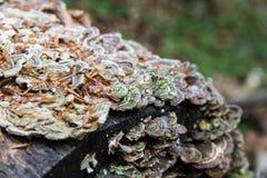 采蘑菇森林 库存照片