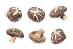 采蘑菇椎茸 免版税库存图片