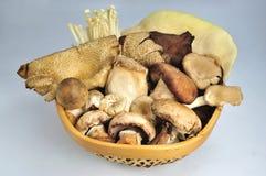 采蘑菇热带种类 免版税库存照片