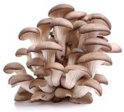 采蘑菇牡蛎 库存照片