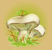 采蘑菇白色 向量例证