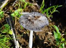 采蘑菇白色 库存照片