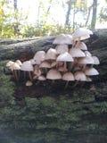 采蘑菇白色 免版税图库摄影