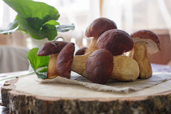 采蘑菇白色 图库摄影
