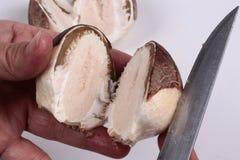 采蘑菇的相似的鲍鱼的内在组织 免版税图库摄影