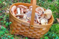 采蘑菇的篮子 库存照片