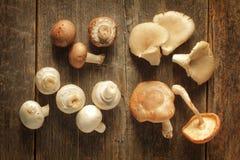 采蘑菇种类 免版税库存图片