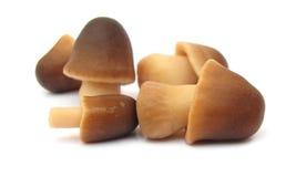 采蘑菇稻秸杆 图库摄影