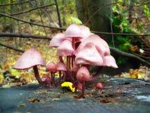 采蘑菇结构树 免版税库存照片