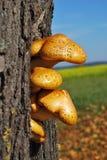 采蘑菇结构树 图库摄影