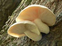 采蘑菇被日光照射了 库存图片
