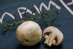 采蘑菇迷迭香 免版税图库摄影