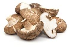 采蘑菇选择shitake 库存图片