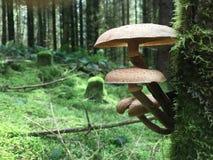 采蘑菇通配 免版税库存照片