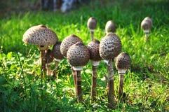 采蘑菇遮阳伞 免版税图库摄影