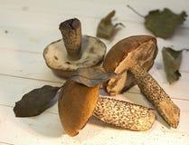 采蘑菇静物画1 库存照片