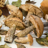采蘑菇静物画2 库存照片