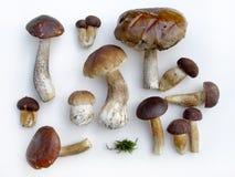 采蘑菇高原 库存图片