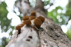 采蘑菇结构树 库存图片