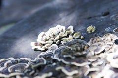 采蘑菇结构树 免版税库存图片