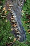 采蘑菇结构树 库存照片