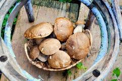 采蘑菇cepes 免版税库存照片