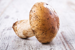 采蘑菇porcini 免版税库存照片