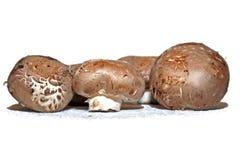 采蘑菇portobello 免版税库存图片