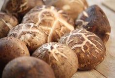 采蘑菇shitake 库存照片
