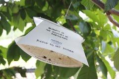采集昆虫样品从树 库存照片