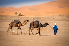 巴巴里人人主导的有蓬卡车, Hassilabied,撒哈拉大沙漠,摩洛哥 免版税库存图片
