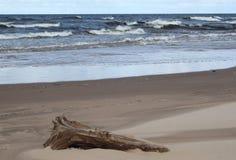 里加湾海岸 库存照片