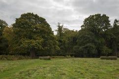 里士满公园,伟大的Britan, 2017年10月14日 免版税图库摄影