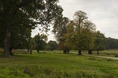 里士满公园,伟大的Britan, 2017年10月14日 库存图片