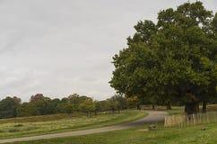 里士满公园,伟大的Britan, 2017年10月14日 免版税库存照片