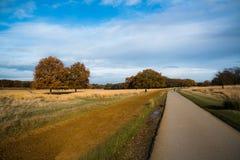 里士满公园,伦敦,英国 免版税库存照片