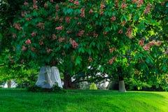 里士满VA有树的,喷泉,小山,在日落的豪宅美国Maymount 免版税图库摄影