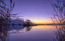 里德剪影平静的湖的在紫色日落期间 免版税库存照片