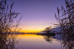 里德剪影有平静的湖的在日落期间 免版税库存照片