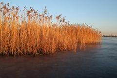 里德在日落期间的冻湖 库存照片