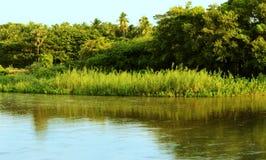 里德植物和河 免版税库存图片
