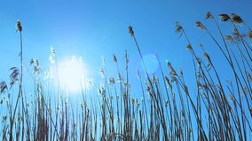 里德植被太阳火光 影视素材