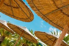 里德沙滩伞和棕榈树 免版税库存照片