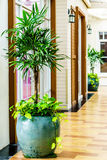 里德粗纤维或在罐装饰a的棕竹或者竹棕榈树 免版税库存照片