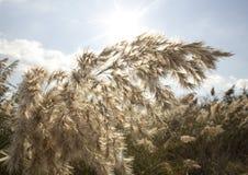 里德,河植被 图库摄影